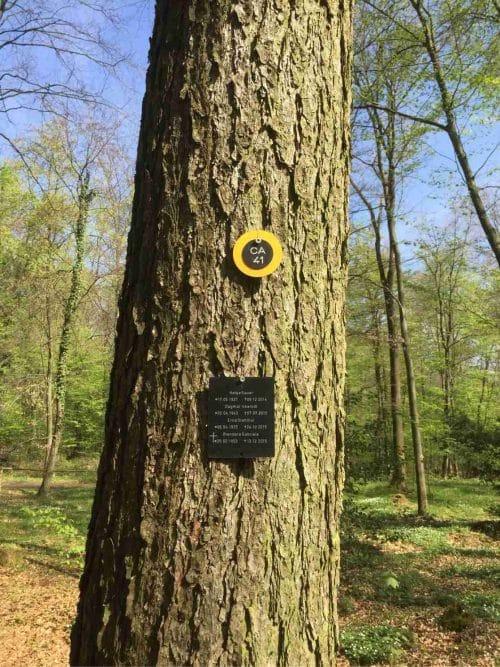 Waldbestattung in der RuhestätteNatur bei Feuerbestattungen24.de