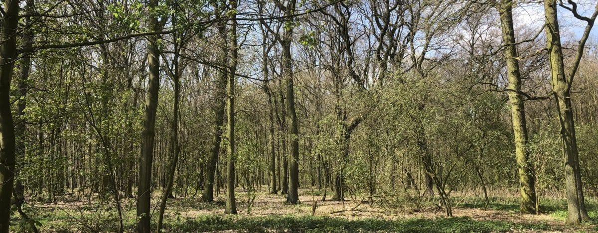 Waldbestattung Feuerbestattungen24.de