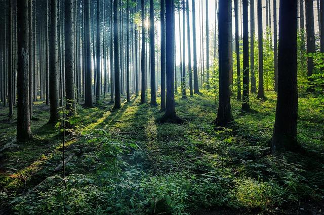 anonyme Baumbestattung im Wald bei Feuerbestattungen24.de